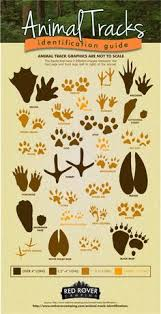 Check Out Our Animal Tracks Identification Guide To See If You Just Missed A Snowshoe Hare