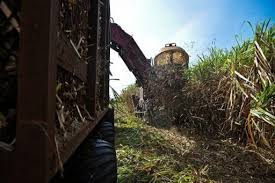 Cuba To Use Sugar Cane In New Electricity Plant