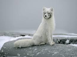 Para Colorear Del Artico Animales