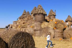 Pumpkin Patch Rides by 5 Day Trip Worthy Pumpkin Patches In And Around Southern Virginia