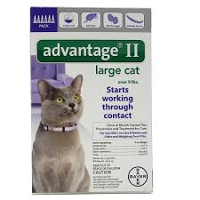 flea treatment for cats bayer advantage ii cat 10 18 pound 6 pack flea cat flea