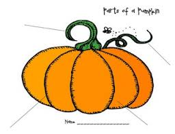 Life Cycle Of A Pumpkin Seed Worksheet by 124 Best Pumpkin Unit Images On Pinterest Board And Drawings