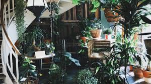 pflanzen für dein treppenhaus diese 6 pflanzen mö es kühl