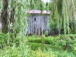 Barn Behind Weeping Willow Tree   Bonniegcarter Tammie Dickersons Arstic Journey September 2014 The 7msn Ranch Breakfast From Behind The Barn John Elkington Caroline From 0 To 60 In Well Years Sunrise Behind A Barn On Foggy Morning Stock Photo Image 79809047 Red Trees 88308572 Untitled Document Our Restoration Preserving History Through Barnwood Rebuild Tornado Forming Old Royalty Free Images Sketch For By Hbert Sidney Palmer At Consignorca Shed Olper And Fustein Innervals Vals Valley Towering Sunflower Growing Beside Bigstock