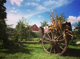 Pumpkin Picking Ct Easton by 20 Best Places To Go Apple Picking In The Northeastern U S