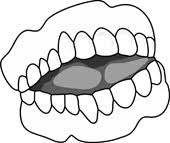 Teeth Clipart Size 54 Kb From Anatomy