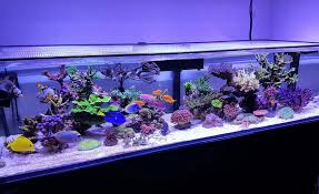 Pin By Don Torres On Sps Shallow Reef Tank | Pinterest | Shallow Home Design Aquascaping Aquarium Designs Aquascape Simple And Effective Guide On Reef Aquascaping News Reef Builders Pin By Dwells Saltwater Tank Pinterest Aquariums Quick Update New Aquascape Of The 120 Youtube Large Custom Living Coral Nyc Live Rock Set Up Idea Fish For How To A Aquarium New 30g Cube General Discussion Nanoreefcom Rockscape Drill Cement Your Gmacreef Minimalist 2reef Forum