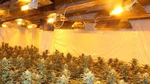 darum gibt es so viele cannabis plantagen am niederrhein in nrw