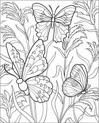 Free Coloring Pages Butterflies