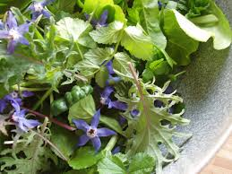 Melbourne Seasonal Eating The Salad of Underutilised Greens