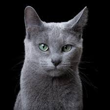 russian cat names cats robert bahou