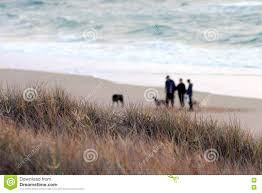 100 Currimundi Beach People Walking Dogs In The Morning Stock Image Image Of