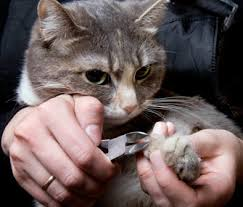 how to cut a cats nails trim your cat s nails without the stress