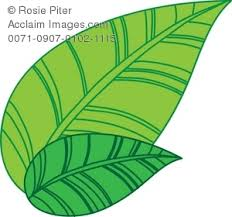 Green Tea Leaves Royalty Free Clip Art Picture