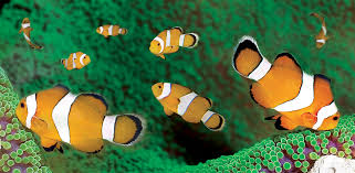aquarium de la rochelle un océan pour v cing car magazine