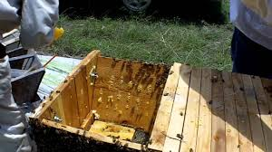 Moving Top Bar Hives And Other Minor Disasters - YouTube Top Bar Hive Honey Harvest By Jon Peters Youtube Bees In Ca Bkeeping With Les Crowder How To Straighten Top Bar Combs Queen Victoria Sept 18 Nuc Install Equipment Decisions Kenyan Part 1 Browns Dtown April 2013 Natural Topbar Bkeeping Lesson Learning From The Master Hives Swarm After 6 Weeks Lindas June 2012 Beehive Update May 2015