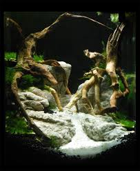 Aquascape Aquarium Setup Manten Stone ADA - YouTube How To Set Up An African Cichlid Tank Step By Guide Youtube Aquascaping The Art Of The Planted Aquarium 2013 Nano Pt1 Best 25 Ideas On Pinterest Httpwwwrebellcomimagesaquascaping 430 Best Freshwater Aqua Scape Images Aquascape Equipment Setup Ideas Cool Up 17 About Fish Process 4ft Cave Ridgeline Aquascape A Planted Tank Hidden Forest New Directly After Setting When Dreams Come True