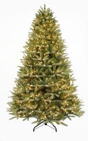 75 Ultra Lit LED Westerly Fir Clear