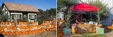 Pumpkin Patch With Petting Zoo Inland Empire by Big Horse Corn Maze Temecula Ca