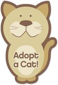 adopt a cat adoption information and applications griffin pond animal shelter