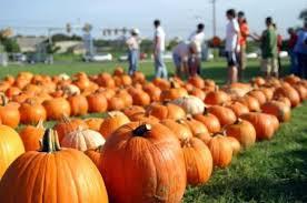 Best Pumpkin Patch Austin Texas by Best Pumpkin Patches In Houston Axs