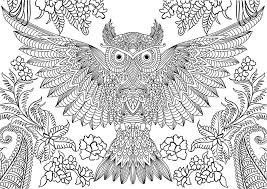Coloring Site Pages Of Owls For Adults With Free Printable Owl