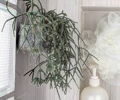 Plants In Bathrooms Ideas by Botanical Shower Buddy 4 Steps With Pictures