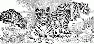 Tiger Coloring Pages 1