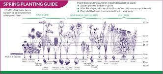 growing tips bulbs direct