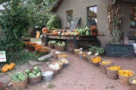Natural Fertilizer For Pumpkins by Fafardvegetable Gardening Fafard