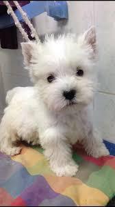 Cute Non Hypoallergenic Dogs by Ahh Look At His Little Heart Nose Thank God They Grow Up Our