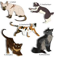 warrior cat best 25 warrior cat drawings ideas on warrior cats