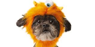 Is Halloween Capitalized by Petsmart Halloween Costumes To Dress Your Dog Or Cat