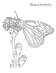 Monarch Butterfly Coloring Page For Kids