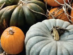 Varieties Of Pumpkins by Pumpkins U0026 Squash For Pies U0026 Baking Visitvortex Magazine