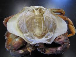 Do Hermit Crabs Shed Their Body by Ptmsc Blog Shedding One Skin For Another Bigger Is Better