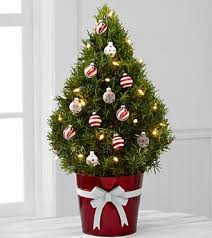 Potted Christmas Trees For Sale by Small Potted Christmas Trees Christmas Decor