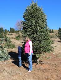 Brown Christmas Tree Farm Boone Nc by North Carolina Archives The Unextreme