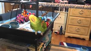 ranger got a avian sun floor l