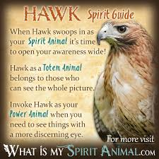 Hawk Symbolism & Meaning | Spirit, Totem & Power Animal Is This Bird Sick Learn The Signs Blue Jay Feather Meaning Diurnal Definition What Birds Are Why Backyard Getting Drunk On Fermented Berries A Cardinal Is A Presentative Of Loved One Who Has Passed When Are Dying In Central Michigan From Cadesold Ddt Pollution Skeletons Tit Wings And Wings Meet Brainiacs American Crow Audubon Hawk Symbolism Dreams Totem