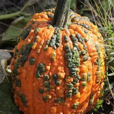 Varieties Of Pumpkins by Salt Lake Pumpkin Patch Cross E Ranch