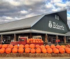 Eckerts Pumpkin Patch St Louis Mo by The Best Pumpkin Patches In Missouri