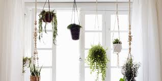 entdecken sie wie sie das wohnzimmer mit pflanzen