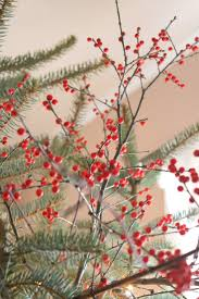 Winterberry Christmas Tree Farm by 50 Best Eco Friendly Christmas Ideas Images On Pinterest