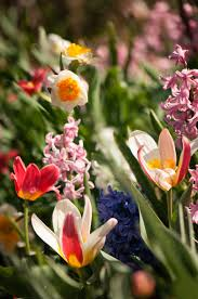 top 10 bulbs for fall planting