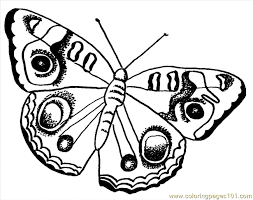 Coloring Pages Insects Butterfly Free Printable Page