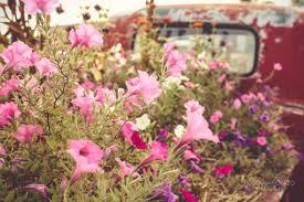 RED VINTAGE TRUCK Back Vintage Red Truck Flowers Pink Green