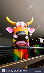 Decorated Cow Skulls Australia by Painted Cow Stock Photos U0026 Painted Cow Stock Images Alamy