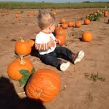 Oklahoma Pumpkin Patches by Tg Farms Csa 4335 W Hwy 9 Norman Ok Phone Number Yelp