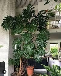 pin carson fedkow auf house zimmerpflanzen dekor